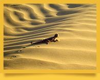 Пустыни Узбекистана